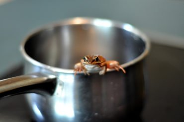 The 111 East Chestnut Condominium Insider 111 and the Boiling Frog Syndrome